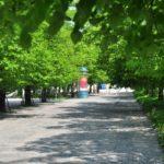 Zieleń i drzewa