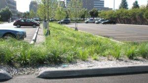 Parkingi czy drzewa
