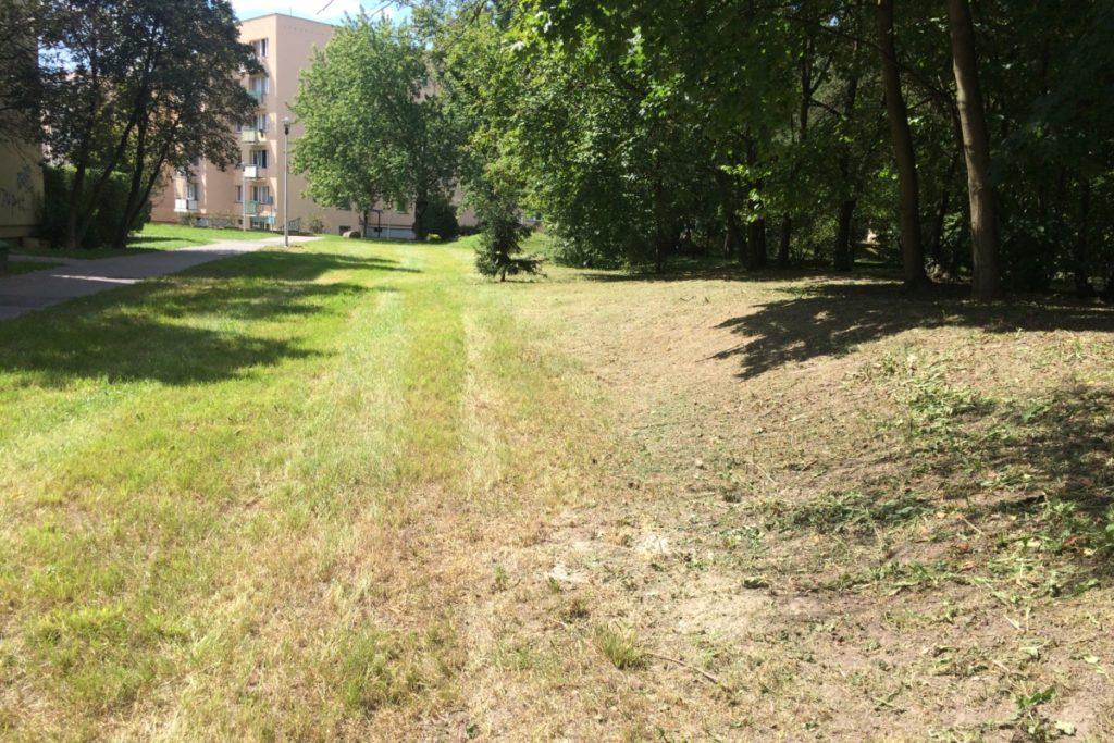 Ursynów, trawnik