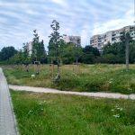 Trawnik wzdłuż al. KEN